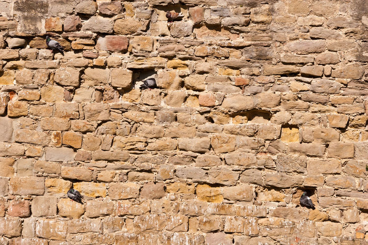 Full Frame Backgrounds Built Structure Architecture Textured  Wall No People Pattern Day Wall - Building Feature Stone Wall Rough Solid Brick Nature Brown Outdoors Old Close-up Sunlight Textured Effect Cement