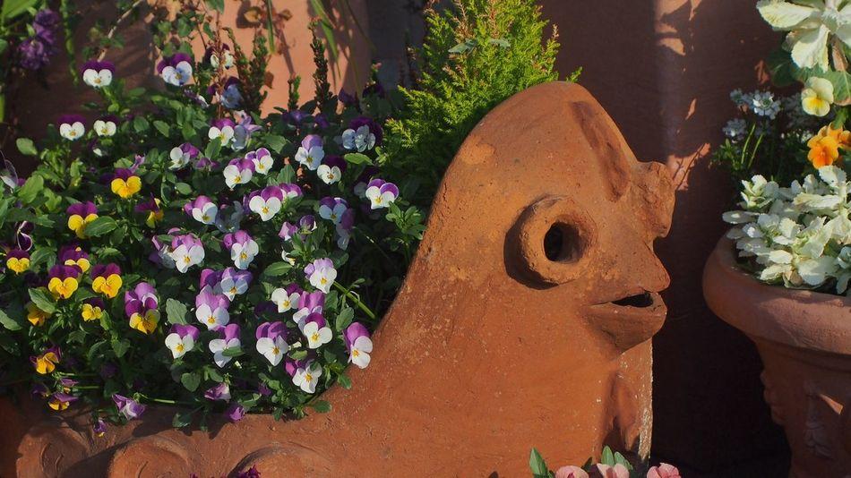 にわとりさん Flowers CanonFD  Photowalk EyeEm Animal Lover #oldlens
