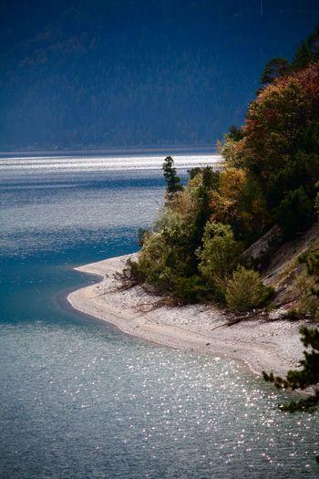 Tree Trees Tree By The Lake Tree By The Sea Tree By The Water Edge Tree By Water Tree And Sea EyeEmNewHere