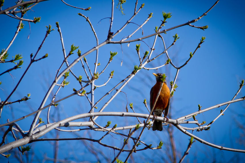 Animal Beauty In Nature Bird Blue Branch Close-up Day Focus On Foreground Low Angle View Nature No People Outdoors Perching Plant Sky Tranquility Tree Twig Wildlife Colorado
