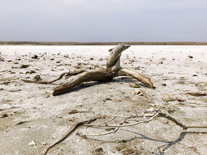 Cyprus Larnaca Larnaca Salt Lake Dead Tree IPhoneography Tourist Sights