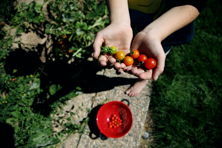 Backyard Color Farm Food Freshness Fruit Garden Gardening Green Hands Healthy Eating Holding Nature Orange Organic Outdoors Person Red Ripe September Summer Tomato Utah Vegetables Art Is Everywhere