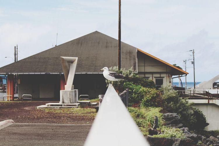 Eoskissx7i Bird Hachijo-island 八丈島 OpenEdit Bird Photography Japan Tokyo