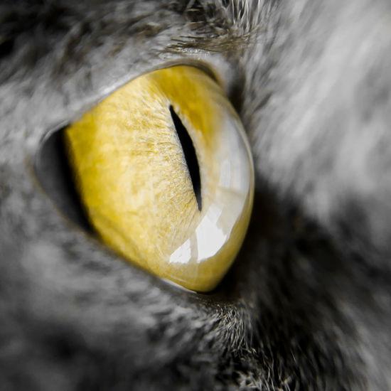 Close-up of lemon slice