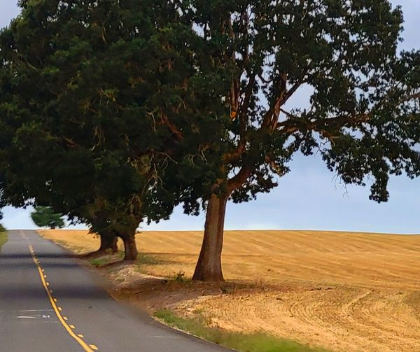 Trees on field by road against sky