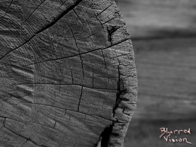 Hello! It means terve! Here is my new watermark. That blaablaablaa photography was boring. This one is mine. It's because of keratoconus. That is one nasty eye disease! What do you think about this watermark? Day No People Outdoors Wood - Material Keratoconus Watermark Test