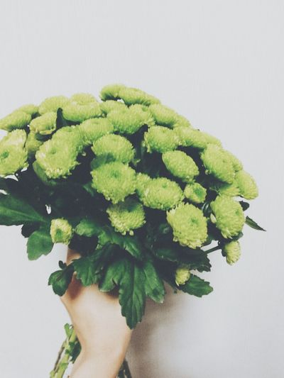 Flowers#nature#hangingout#takingphotos#colors#hello Worldflorafauna F Working