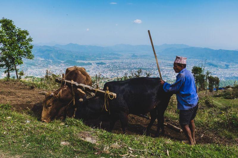 Ploughing over Pokhara lakeside.