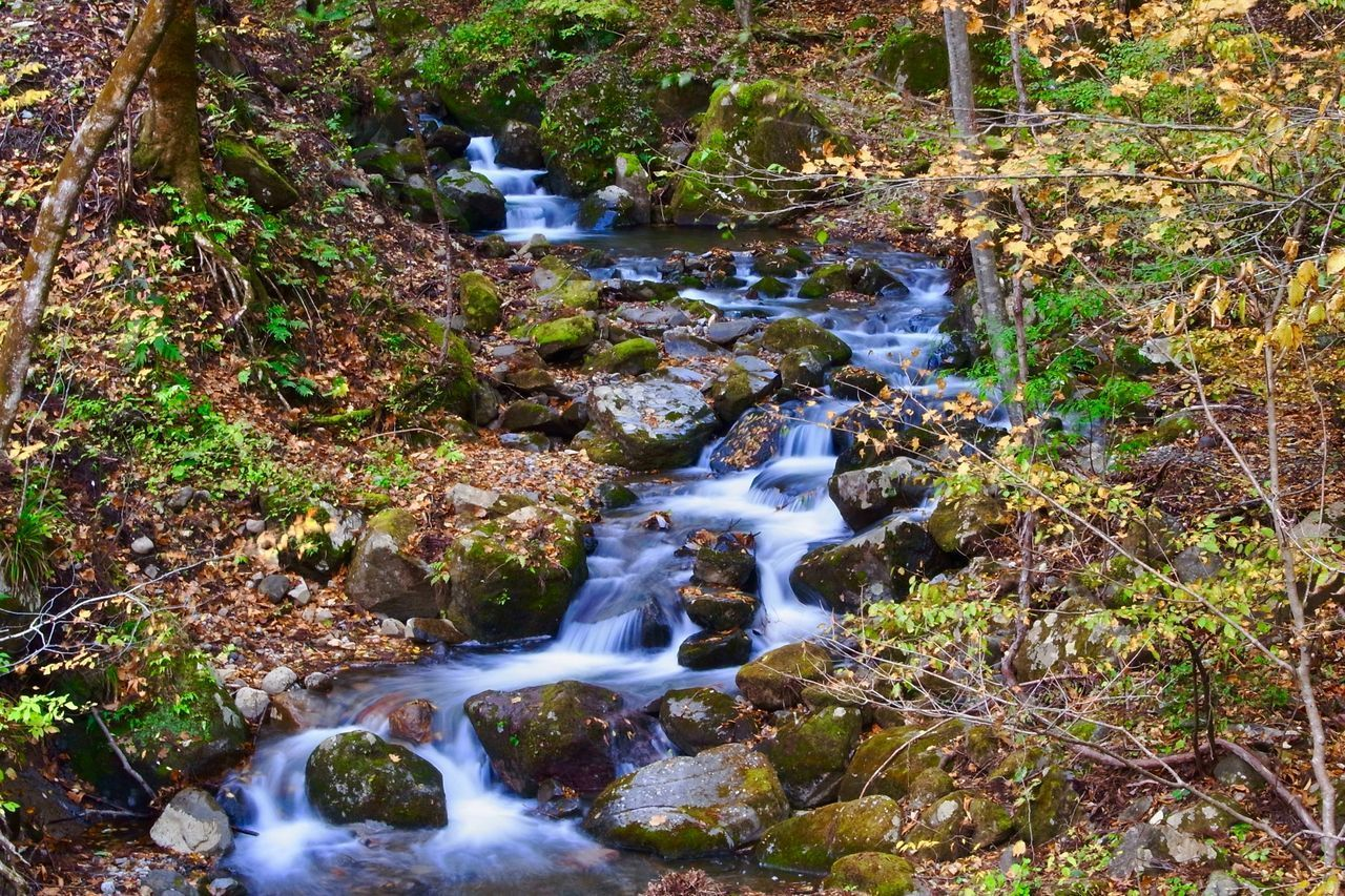 waterfall, flowing water, water, motion, nature, long exposure, beauty in nature, forest, tranquil scene, blurred motion, scenics, outdoors, stream, rock - object, day, tranquility, no people, tree, rapid