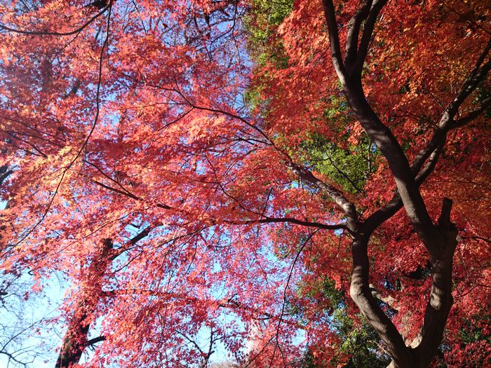 Shinjuku-gyoen Tokyo,Japan Tree Full Frame Branch Low Angle View Nature Backgrounds Beauty In Nature Outdoors Day No People Multi Colored