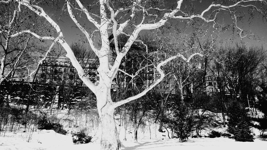 My love dor nature. Nature Trees Park Mothernature Blackandwhite Photography Snow ❄ Relaxing