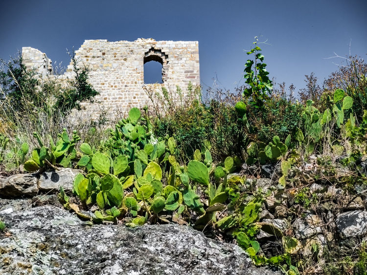 No People Ruined Ruins Ruins Architecture Cactus Collection Cactus Sunlight Sky Ancient Civilization Stone Wall Architecture Clear Sky Plant Part Green Color Built Structure Plant Nature Growth Building Exterior Day History Tree Building Solid Outdoors The Past Leaf