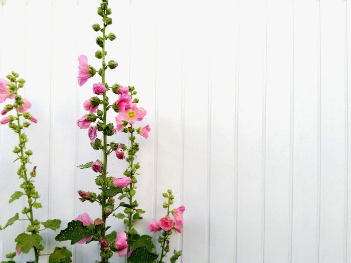 Close-up of flowers against the wall