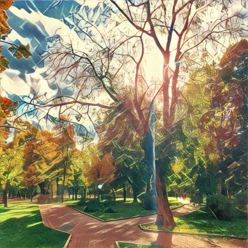 Tree Autumn Change Tranquil Scene Tranquility Beauty In Nature Park Prisma Tadaa Community Autumn Golden Autumn