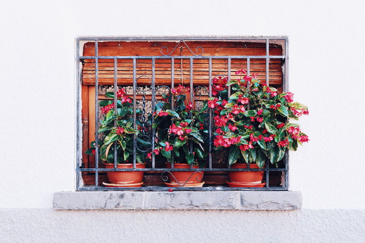 Architecture Building Exterior Built Structure Day Flower Flower Pot Flowering Plant Freshness Gardening Green Color Growth Houseplant Nature No People Outdoors Plant Potted Plant Red Town Wall Wall - Building Feature Window Window Box