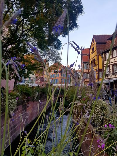 Colmar -Alsace - France Flower Architecture Built Structure Nature Building Exterior Plant Lights And Shadows Taking Photos Atmosphere Relaxing Moments Getting Inspired From My Point Of View Getting Creative Oldbuildings Streetphotography Historic City Architecture Architecture_collection