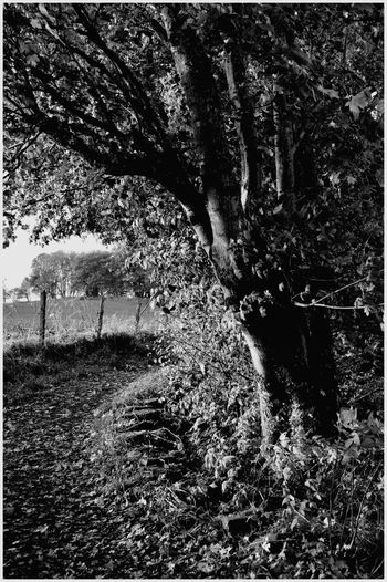 Tree Growth Nature Outdoors Day Beauty In Nature Branch Kirriemuir Countryside Cloud - Sky Landscape Beauty In Nature Textured  Autumn Rural Scene Raining Day Scenics Growth Agriculture black and white