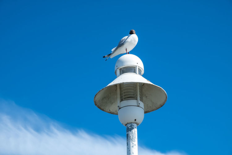 Low angle view of seagull perching on pole against sky