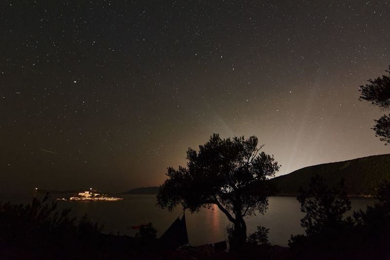 Night sky and bay with olive tree near Tivat in Montenegro . Long Exposure Nightphotography Night Sea Stars