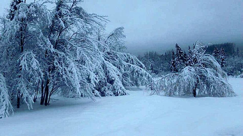 Woke to this. Incredible. Hanging Out Vacation Pic! Hello World Enjoying Life Nature Shadows & Lights Trees Snow Covered Snow_collection Nova Scotia Snow ❄ Snow Day Incredible Moment Nature Photography Coldoutside Beautiful Nature Snowcoveredtrees Beauty Everywhere Tranquility Tranquil Scene Outdoor Photography