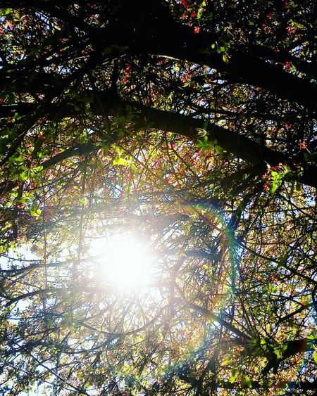Sunshine Through The Trees Sunset #sun #clouds #skylovers #sky #nature #beautifulinnature #naturalbeauty #photography #landscape Sunshine Makes Everything Better Tree_collection  Something Beautiful Outside Photography Eyemphotography Eyem Gallery Love To Take Photos ❤