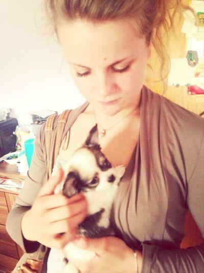 Best Friends Hanging Out Chihuahua Puppy❤ Mein kleiner scheißer ♡♡♡♡
