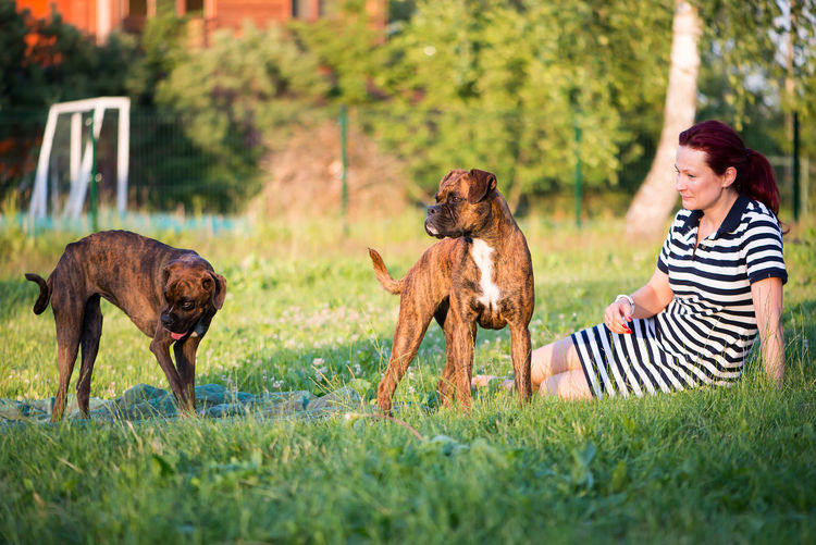 young beautiful woman playing with boxer dog in the garden Boxer Boxer Dog Boxers Cute Pets Dogs Happy Joyful Woman Animal Best Friends Boxer Dogs Candid Cute Dog Dog And Owner Dog Trainer Dog Training Domestic Domestic Dog Human And Animals Outdoors Owner Pets Puppy Purebred Dog