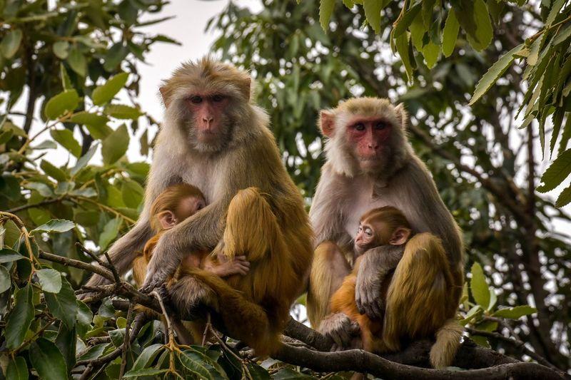 Portrait of monkey family sitting on tree