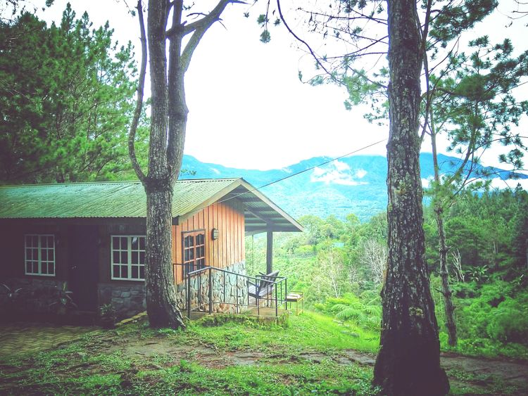 Small House In The Woods Cabin Mountain Trees Nature Outdoors No People Cold Place House Mobile Photo