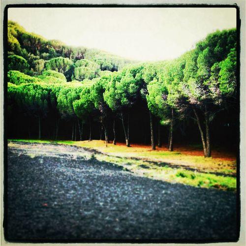 Nature Etna