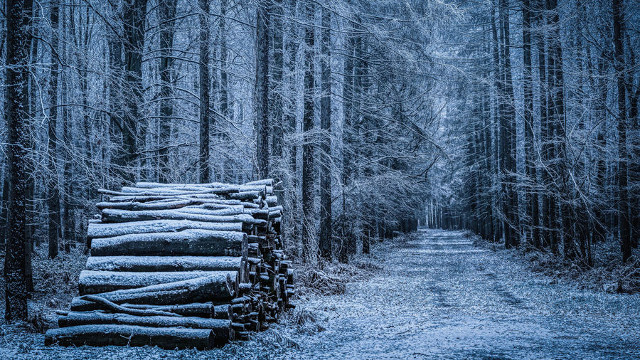 Blue Logs Tree Forest Plant Cold Temperature Winter Land No People Snow Nature WoodLand Direction Beauty In Nature Tranquility The Way Forward Tranquil Scene Footpath Tree Trunk Trunk Day Outdoors Pine Tree Diminishing Perspective Treelined Coniferous Tree Evergreen Tree