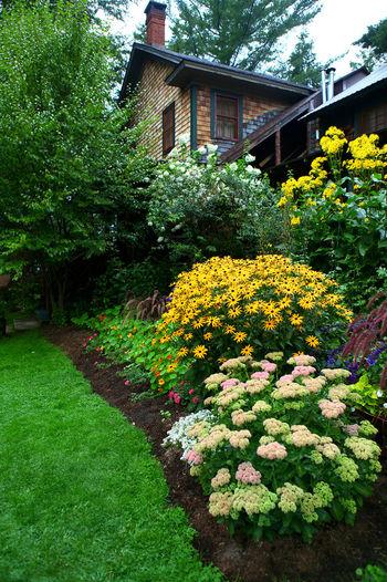 Yellow flowers growing in garden