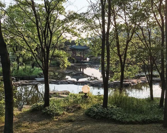 Trees at riverbank