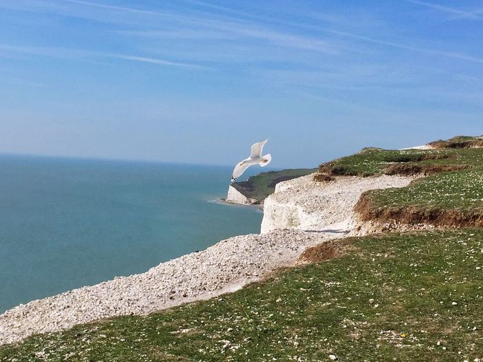 Seagull flying over cliff by sea against sky