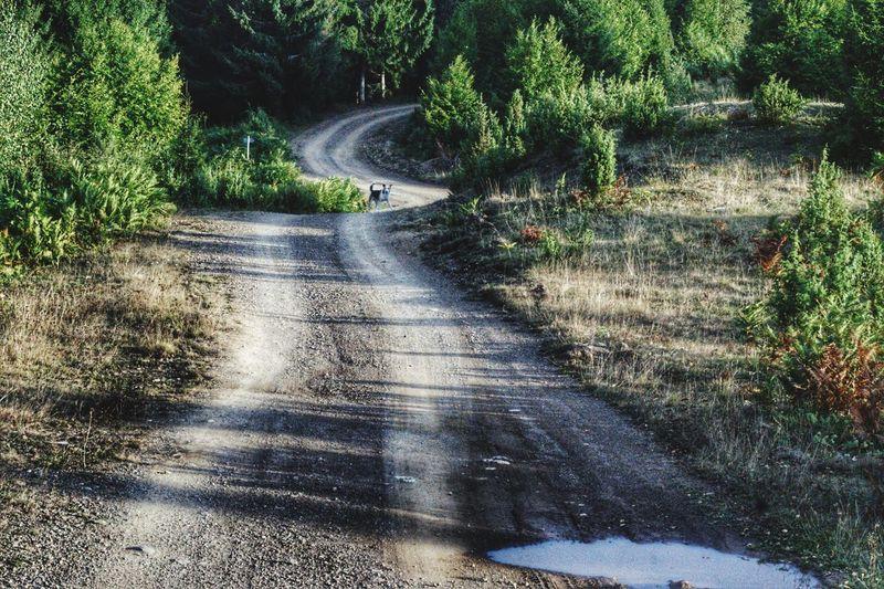 Water Tree Road