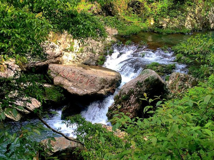 Stream Waterfall Nature Nature_collection Nature Photography Plants 水流潺潺