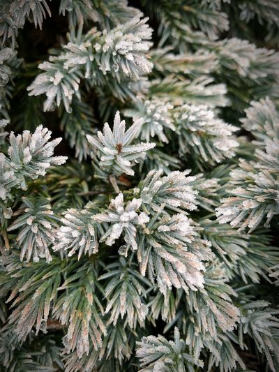 Nature Plant Growth Cold Temperature Beauty In Nature Winter Nature Close-up Day Green Color Frost Snow Leaf Backgrounds Full Frame High Angle View Frozen No People Ice Plant Part Outdoors