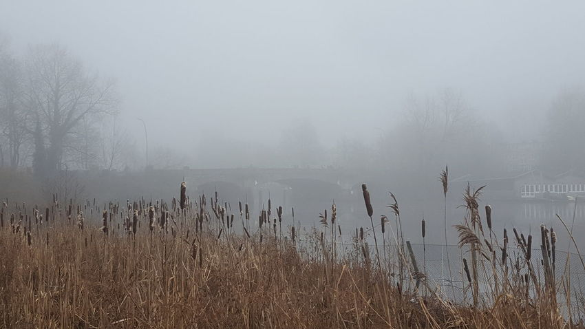 Alster GERMANY🇩🇪DEUTSCHERLAND@ Germany🇩🇪 Hamburg Hamburg City January January 2018 Winter Winter Fog Beauty In Nature Foggy Foggy Day Germany Lake Lake View Mystical Atmosphere Nature No People Outdoors Peaceful Peaceful And Quiet Silence Of Nature Fog Hazy  Mist Tranquility Tranquil Scene Cold Temperature Water Scenics