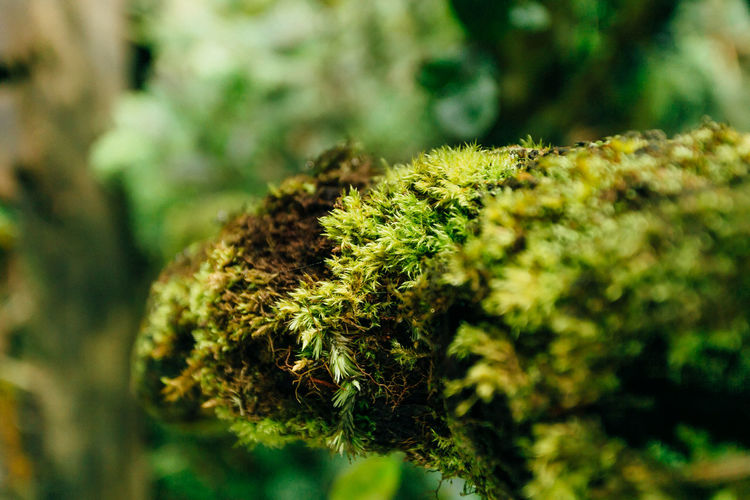 Nature Beauty In Nature Cannabis Plant Close-up Forest Green Color Growth Moss No People Outdoors Plant