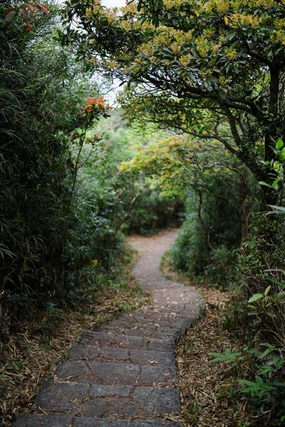 Nature Footpath Tree Outdoors The Way Forward Tranquility Plant Beauty In Nature Tranquil Scene Walkway Foliage, Vegetation, Plants, Green, Leaves, Leafage, Undergrowth, Underbrush, Plant Life, Flora Winding Stairs Stairways HongKong