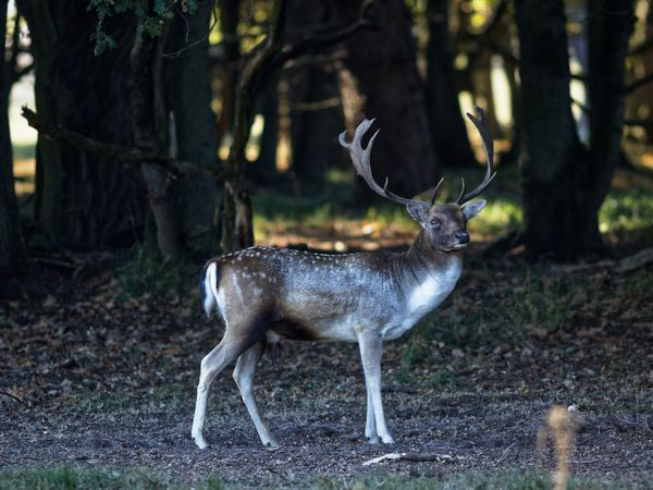 Ready For It Buck Fallow Deer Animal Themes Animal Deer Animal Wildlife Animals In The Wild Mammal Antler Forest Stag