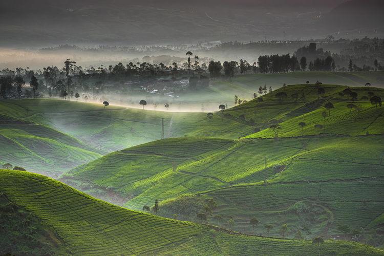 Cukul Cukul INDONESIA Landscape Photography Landscape_Collection Nature Indonesia_photography Landscape Landscape #Nature #photography Landscape_photography Mountain Nature_collection Pangalengan Tea Garden