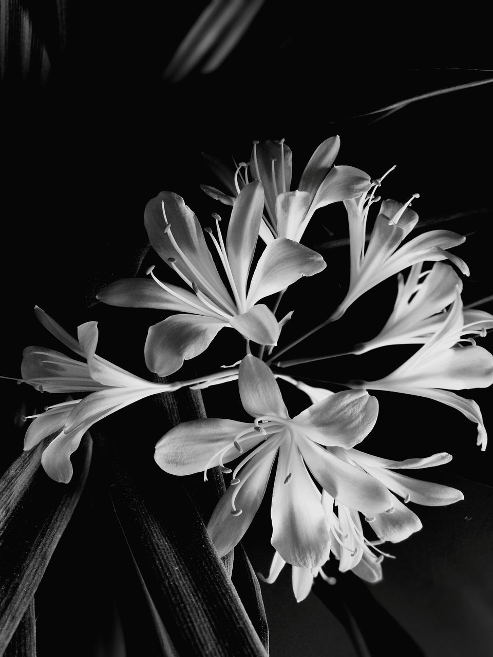 flower, petal, growth, beauty in nature, flower head, fragility, nature, plant, freshness, no people, night, close-up, black background, blooming, outdoors