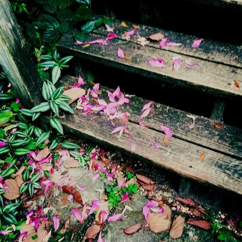 Violet Flowers On Steps Stairs Petals Wooden Secret Garden Ruskin Florida