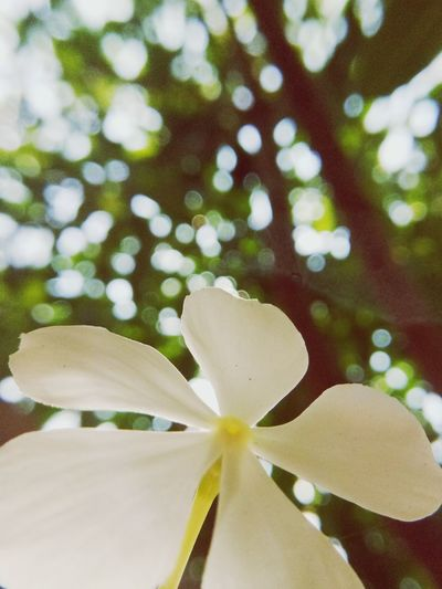 EyeEmNewHere EyeEm Selects White White Flower White Color Nature Green Tree Grass Green Color Bokeo Bokeo Background Light Flower Head Flower Water Petal Close-up Plant In Bloom Blossom Focus