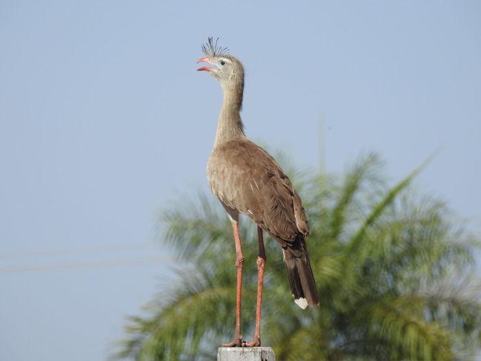 Bird Full