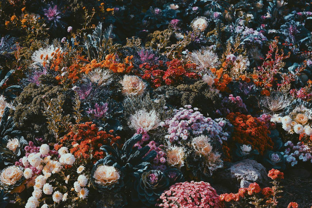 Full frame shot of flowerbed