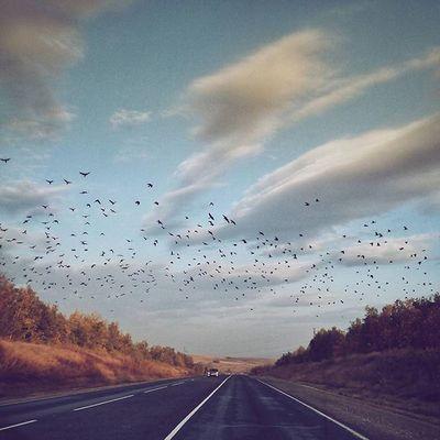 Поехали Roadtrip Autumn Nature September Sky Clouds Instagood начнипутешествовать Birds Weather Showmerussia Showmerussia Nowrussia