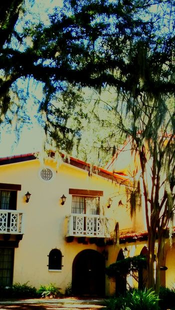 Old-fashioned Hotel California Stucco Stuccotexture Weeping Willow Cypress Trees  Floridalife Trees And Sky Shinning Bright Enjoying Life ♥ Bright_and_bold Vacation Time ♡ Art Deco Balcony Shot