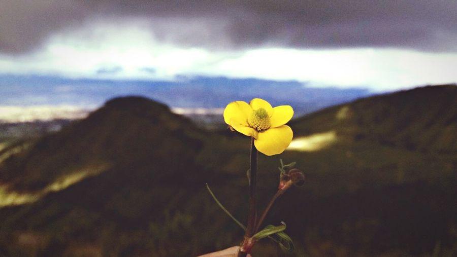 Aquel momento único donde la perfección se apodera de tus ojos Ecuador Trip Primeroecuador Flowers Photography